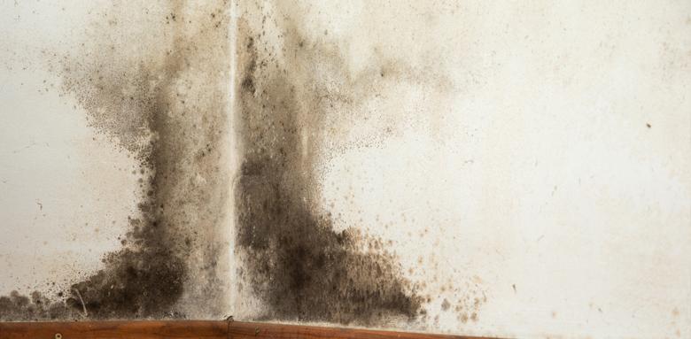 Traitement des murs humides : les erreurs à éviter